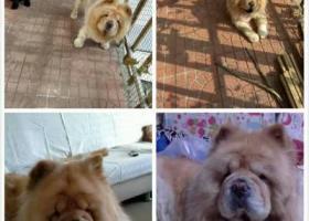 寻找2月4号晚在顺义怡馨家园小区东门丢失的狗狗俩只