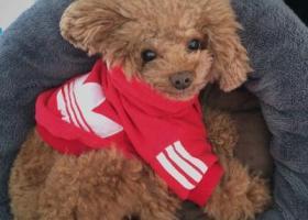 寻狗启示,寻找宝贝狗狗--QQ,它是一只非常可爱的宠物狗狗,希望它早日回家,不要变成流浪狗。