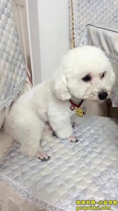 寻狗启示,2月18号白色比熊丢了,它是一只非常可爱的宠物狗狗,希望它早日回家,不要变成流浪狗。
