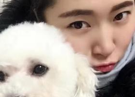 寻狗启示,白色比熊2月18号中午,它是一只非常可爱的宠物狗狗,希望它早日回家,不要变成流浪狗。