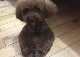 寻找爱犬在义乌胜利二区与胜利菜市场中间的香山路!