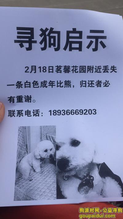寻狗启示,丢失白色比熊2月1号,它是一只非常可爱的宠物狗狗,希望它早日回家,不要变成流浪狗。