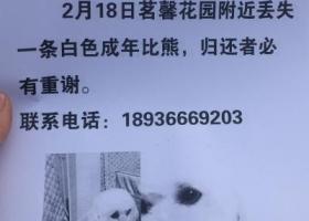 寻狗启示,2月18号丢失白色比熊,它是一只非常可爱的宠物狗狗,希望它早日回家,不要变成流浪狗。