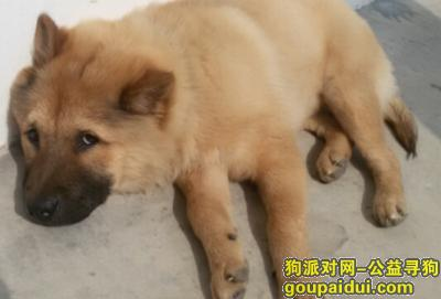 ,寻找一只黄白色乌嘴狗,它是一只非常可爱的宠物狗狗,希望它早日回家,不要变成流浪狗。