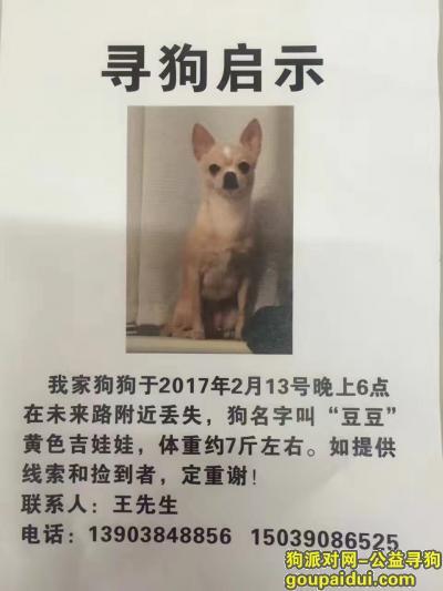 寻狗启示,寻狗宝宝黄白相间,在未来路顺河路估计走失2017年2月13号晚6点,它是一只非常可爱的宠物狗狗,希望它早日回家,不要变成流浪狗。