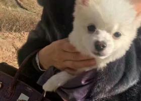 寻狗启示,寻找爱犬小黑豆2月17日下午跑丢,它是一只非常可爱的宠物狗狗,希望它早日回家,不要变成流浪狗。