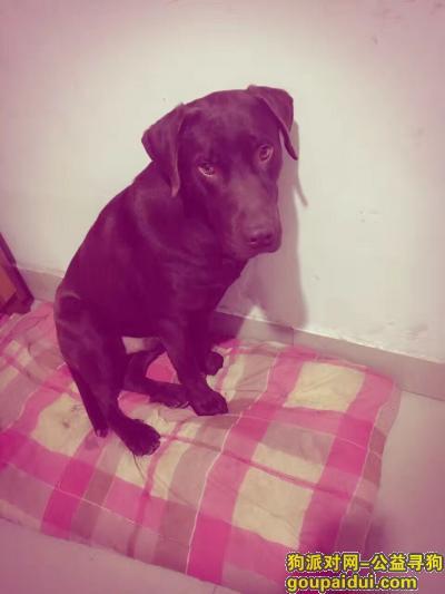 寻狗启示,包头市九原区重金寻狗,它是一只非常可爱的宠物狗狗,希望它早日回家,不要变成流浪狗。