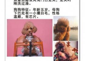 郑州市郑东新区双河湾小区酬谢五千元寻找泰迪