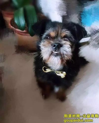 鹤壁寻狗网,狗狗如同家人 急切寻狗名叫阿狸,它是一只非常可爱的宠物狗狗,希望它早日回家,不要变成流浪狗。