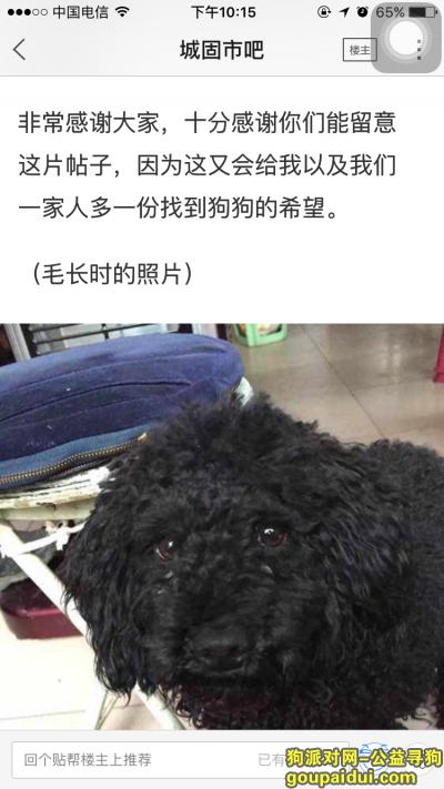 ,汉中城固寻黑色泰迪狗,它是一只非常可爱的宠物狗狗,希望它早日回家,不要变成流浪狗。