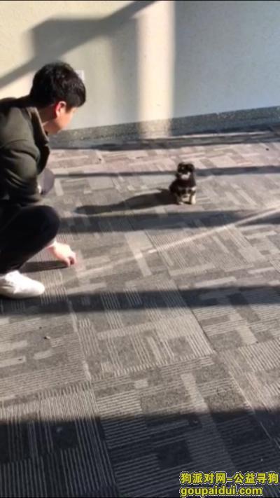 ,在鸠江区宜居春水湾捡到一只丢弃狗,找爱心人领养,它是一只非常可爱的宠物狗狗,希望它早日回家,不要变成流浪狗。