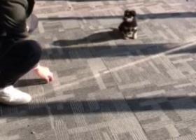 寻狗启示,在鸠江区宜居春水湾捡到一只丢弃狗,找爱心人领养,它是一只非常可爱的宠物狗狗,希望它早日回家,不要变成流浪狗。