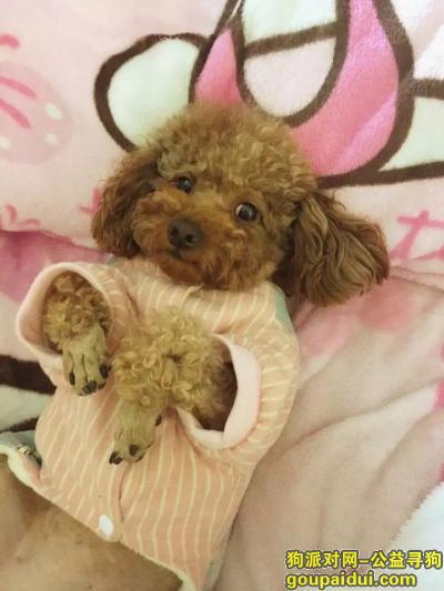 黔东南找狗,文化北路凯运司状元府附近狗狗走丢,主人很急!,它是一只非常可爱的宠物狗狗,希望它早日回家,不要变成流浪狗。