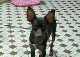 寻狗启示,谁看到这只狗的请联系我,它是一只非常可爱的宠物狗狗,希望它早日回家,不要变成流浪狗。