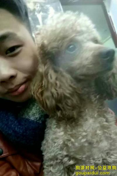 宜春寻狗启示,泰迪赏金一千,联系微信309759193,它是一只非常可爱的宠物狗狗,希望它早日回家,不要变成流浪狗。