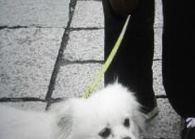 寻找在无锡广勤路石人桥附近走丟的狗狗