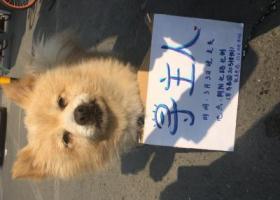 北京市朝阳区朝阳北路附近捡到黄色狗狗一只