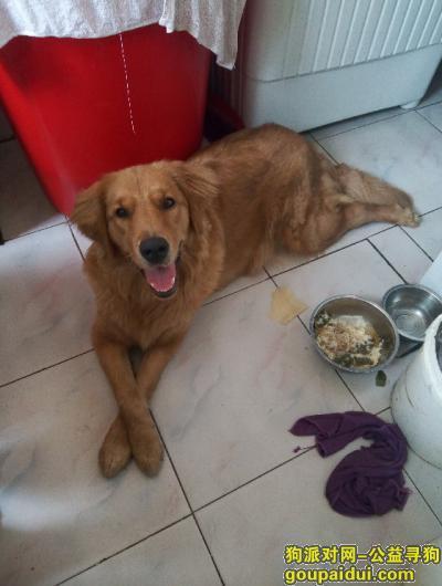 辽源寻狗启示,寻找我的爱犬妞妞我十分着急,它是一只非常可爱的宠物狗狗,希望它早日回家,不要变成流浪狗。