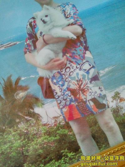 【巢湖找狗】,我家博美犬在巢湖党校路走失,它是一只非常可爱的宠物狗狗,希望它早日回家,不要变成流浪狗。