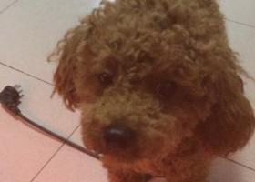 寻狗启示,寻找爱犬希希,盼早日归来,它是一只非常可爱的宠物狗狗,希望它早日回家,不要变成流浪狗。