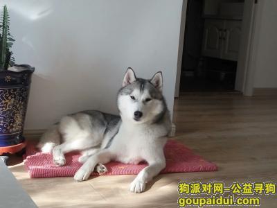 鸡西寻狗启示,寻狗3000元感谢酬金,它是一只非常可爱的宠物狗狗,希望它早日回家,不要变成流浪狗。