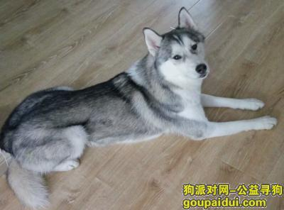 鸡西找狗,3000元酬谢金寻爱犬回家,它是一只非常可爱的宠物狗狗,希望它早日回家,不要变成流浪狗。