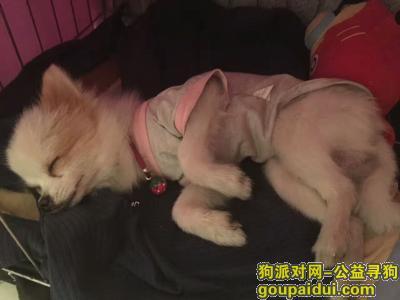 ,本人寻狗启示 我的狗狗不见了 我好想它,它是一只非常可爱的宠物狗狗,希望它早日回家,不要变成流浪狗。