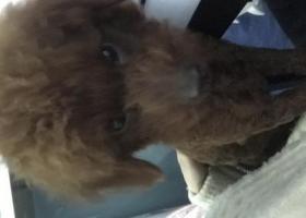 求求大家帮帮忙让狗狗早点回家于成华区驷马桥东立国际附近走失