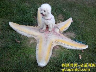 寻狗启示,北京燕郊燕顺路西侧华堂寻找比熊,它是一只非常可爱的宠物狗狗,希望它早日回家,不要变成流浪狗。