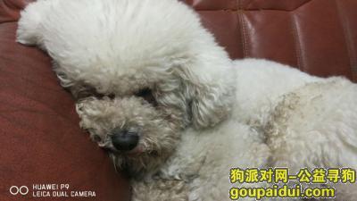 寻狗启示,武汉东湖绿道湖心亭丢失4岁比熊犬一只,好心人发现后,我愿出5000元感谢金,它是一只非常可爱的宠物狗狗,希望它早日回家,不要变成流浪狗。