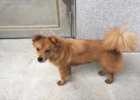 寻狗启示,于厦门湖里高新技术园内看到黄色中型犬一只,它是一只非常可爱的宠物狗狗,希望它早日回家,不要变成流浪狗。
