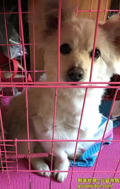 寻狗启示,金华江北新华街附近丢失的公狗,它是一只非常可爱的宠物狗狗,希望它早日回家,不要变成流浪狗。