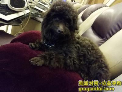 ,卡卡,你快回来,妈妈好想你,它是一只非常可爱的宠物狗狗,希望它早日回家,不要变成流浪狗。