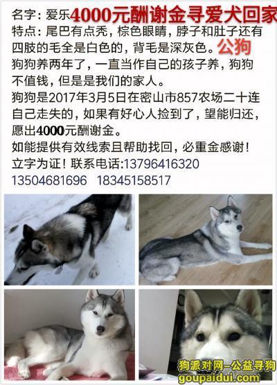 鸡西寻狗网,4000元寻爱犬回家,它是一只非常可爱的宠物狗狗,希望它早日回家,不要变成流浪狗。