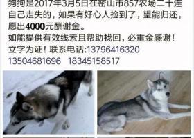 4000元寻爱犬回家