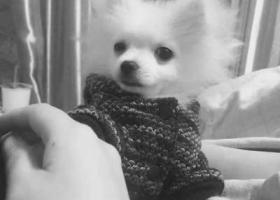 江苏省苏州市金阊区三香路三香公寓  2017年3月19号在三香公寓早上10~20左右走丢  联系电话狗狗名字叫蛋蛋,六个月大,是个男孩,白色的很可爱活泼,如果有见到的可以叫它名字,它能听的懂的。 13739171803 走丢的时候没穿衣服。我真的快急疯了 求求你们帮帮我吧!