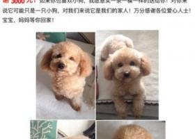 东莞市南城区怡丰都市广场酬谢三千元寻找泰迪