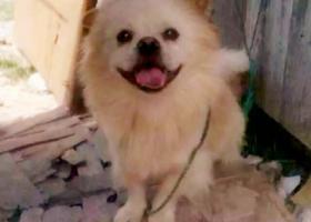 寻狗启示,这是我的希望,希望热心的石圳朋友们能伸出援助之手,谢谢你们!,它是一只非常可爱的宠物狗狗,希望它早日回家,不要变成流浪狗。