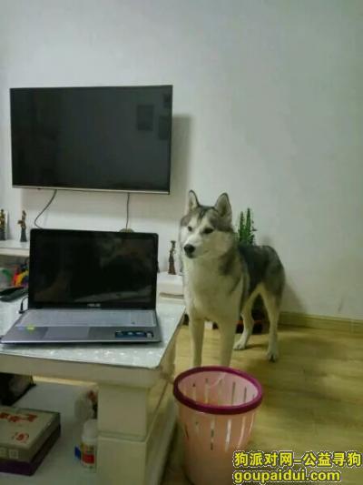 鸡西寻狗网,5000元寻爱犬回家,它是一只非常可爱的宠物狗狗,希望它早日回家,不要变成流浪狗。