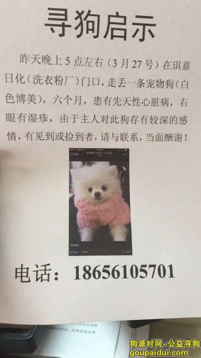 淮北寻狗启示,寻狗∪・ω・∪ 好心人帮忙留意下,它是一只非常可爱的宠物狗狗,希望它早日回家,不要变成流浪狗。