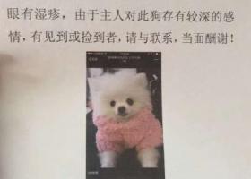 寻狗启示,寻狗∪・ω・∪ 好心人帮忙留意下,它是一只非常可爱的宠物狗狗,希望它早日回家,不要变成流浪狗。