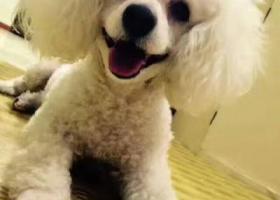 青岛李村公园丢失爱犬!!重谢!!