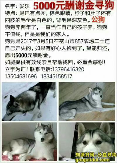 鸡西寻狗启示,5000元寻爱犬回家哈士奇,它是一只非常可爱的宠物狗狗,希望它早日回家,不要变成流浪狗。