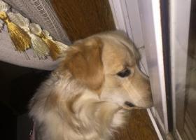寻狗启示,爱狗遗失望好心人帮忙,它是一只非常可爱的宠物狗狗,希望它早日回家,不要变成流浪狗。
