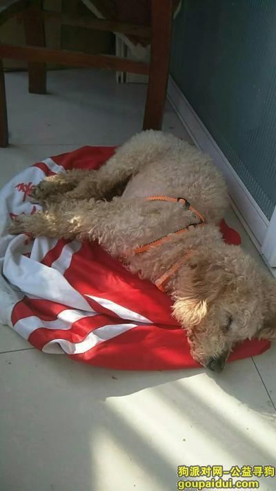 宿州寻狗启示,宿州泗县  寻狗启示,它是一只非常可爱的宠物狗狗,希望它早日回家,不要变成流浪狗。