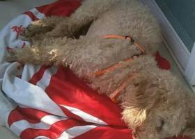 寻狗启示,宿州泗县  寻狗启示,它是一只非常可爱的宠物狗狗,希望它早日回家,不要变成流浪狗。