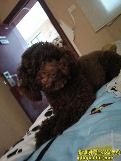 ,寻狗启示,请大家帮我留意一下,它是一只非常可爱的宠物狗狗,希望它早日回家,不要变成流浪狗。