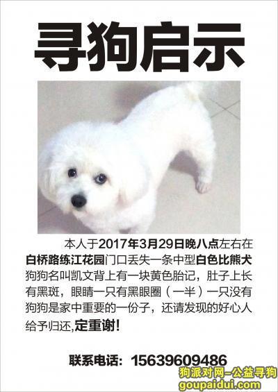 驻马店找狗,寻找自家白色比熊犬,已两岁,它是一只非常可爱的宠物狗狗,希望它早日回家,不要变成流浪狗。