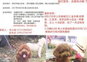 酬谢5000元 找爱犬 壮壮 , 公,12~13斤,东莞南城万江一带