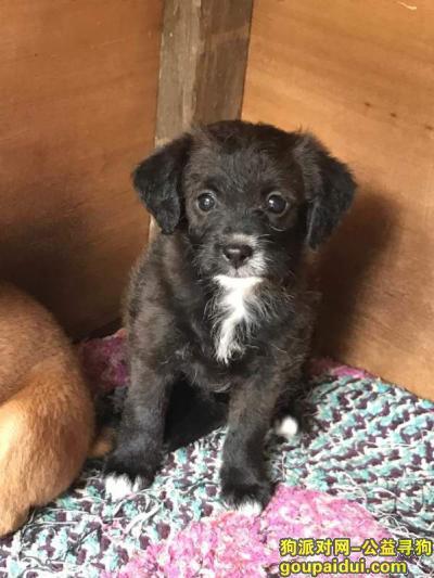寻狗启示,寻找小黑狗,在执信路小学附近丢失已有约20天,它是一只非常可爱的宠物狗狗,希望它早日回家,不要变成流浪狗。